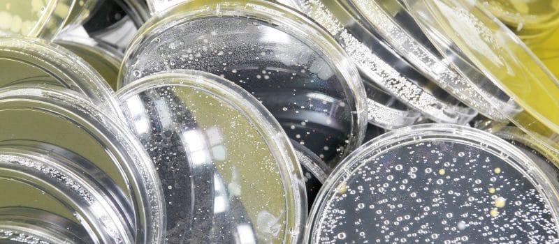 RPS_microbiologie
