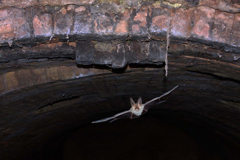 RPS-nieuws-werken-aan-boogbrug-naarden-vleermuis-onderzoek